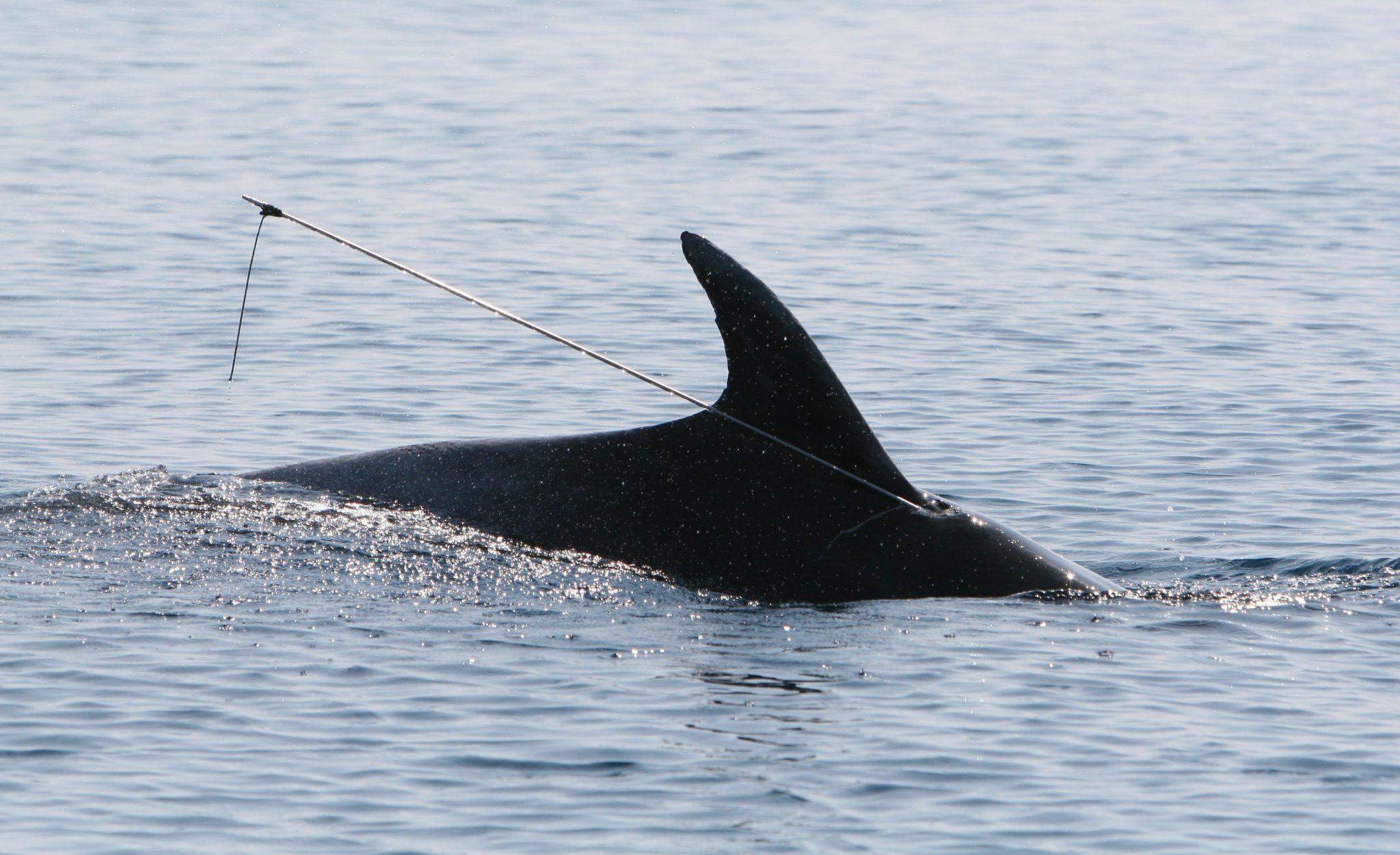 softver za društvene mreže za druženje s delfinima scena izlazaka u sjevernoj Karolini