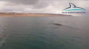 Veliki kit u uvali Rovanjska (Jasenice)